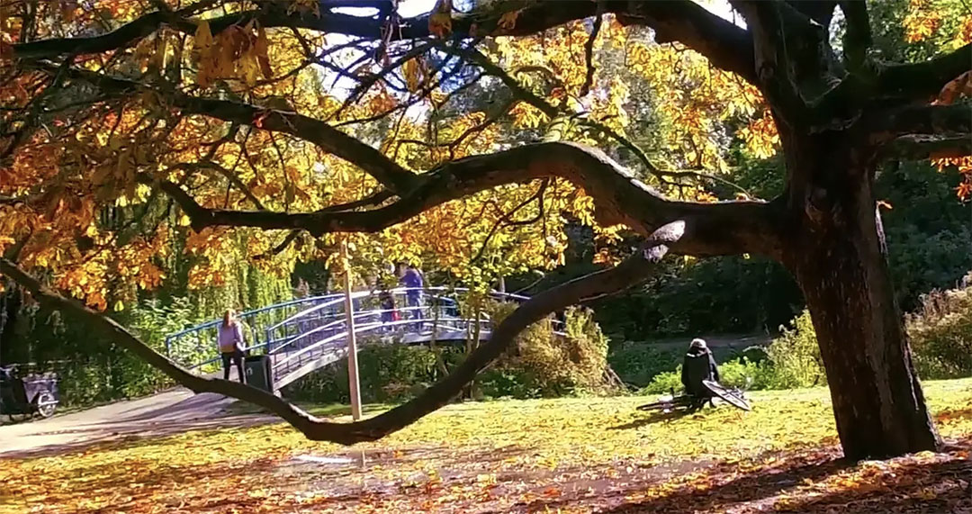 Amsterdam automne
