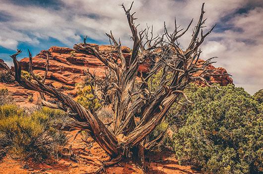 arbre mort canyonlands