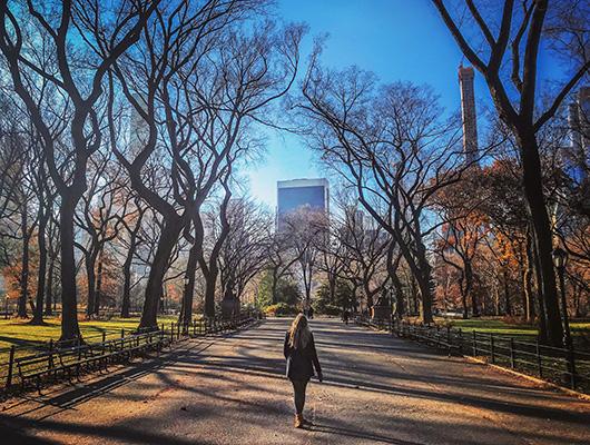 Central Park New York Noël