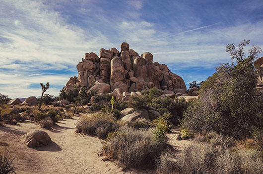 Joshua Tree National Park California Road Trip USA