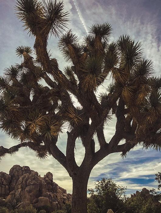 Joshua Tree National Park California Road Trip USA hidden valley nature trail