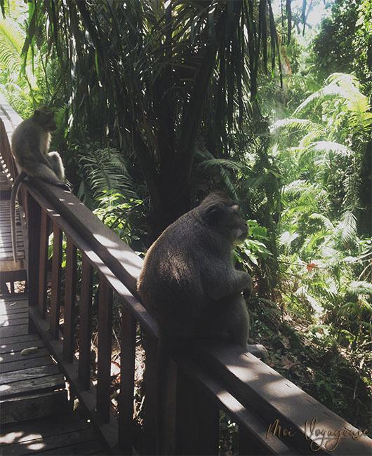 Monkey Forest ubud bali indonésie