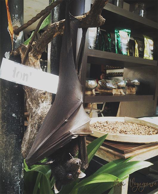 Tanah Lot Bali Indonésie chauve souris