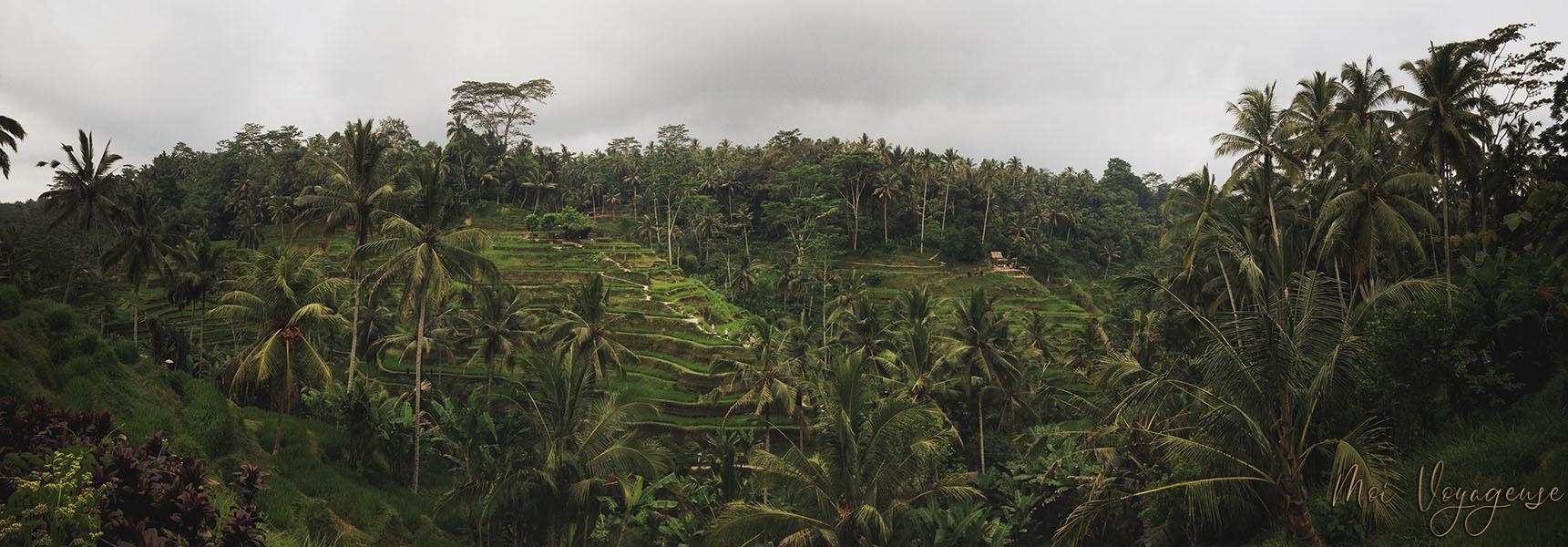 Rizières tegalalang bali udub indonésie